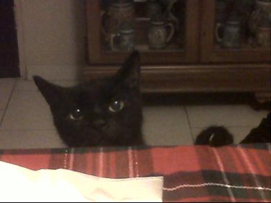 Gato Ismael